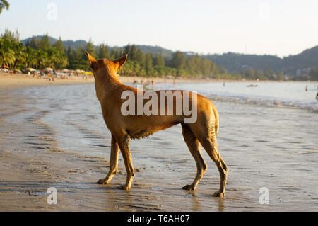Dog walking on the beach watching the summer vacation - Stock Photo