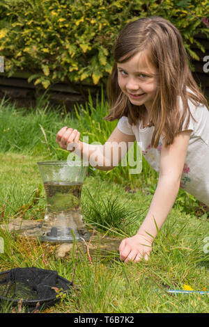 yong girl, eight years old, pond dipping, catching pond life, tadpoles, dragonfly larvae, in net, and putting them in jar, garden wildlife pond, - Stock Photo