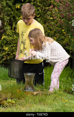 young children, brother and sister, pond dipping together, with net, garden wildlife pond, older brother, younger sister, playing together. nature, - Stock Photo