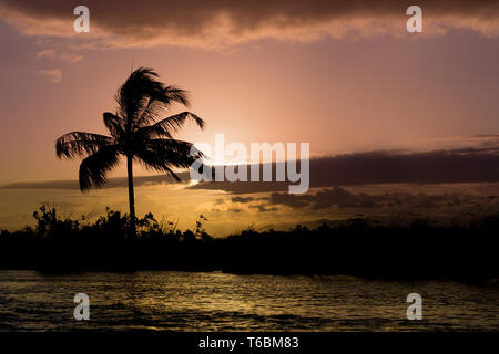 Coconut-tree palm silhouette and sunset over the river - Stock Photo