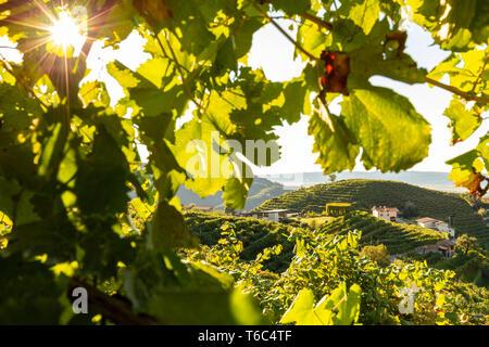 Italy, Veneto. Prosecco Road. Treviso district. Follo, vineyards of Prosecco. - Stock Photo