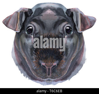 Cute cavy. Pig for T-shirt graphics. Watercolor Skinny Guinea Pig illustration - Stock Photo