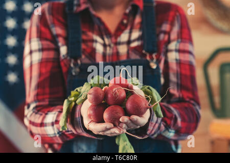American female farmer holding bunch of harvested radishes, close up of hands