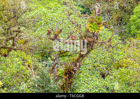 Nebular forest of Monte Verde Costa Rica - Stock Photo