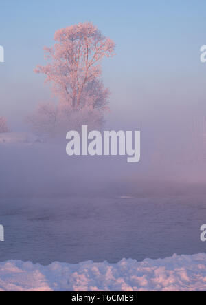 Tree under hoarfrost over river Koksha in clubs at morning time - Stock Photo