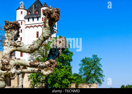 Electoral castle in Eltville in Rheingau, a district of the sparkling wine, wine and rose on the Rhine in the Rheingau-Taunus in Hesse, Germany - Stock Photo