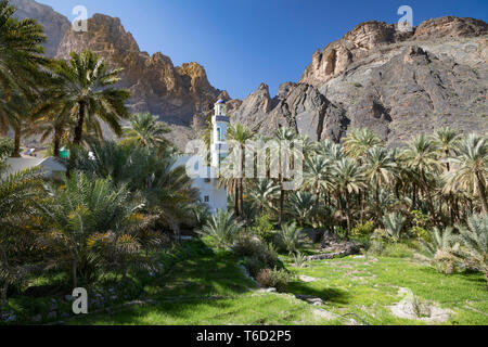 Oman, Dakhiliyah Governate, Jebel Hajar, Balad Sayt. A mosque in the remote village of Balat Sayt surrounded by green terraces and palm trees - Stock Photo