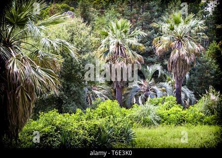 Arboretum of tropical and subtropical plants. - Stock Photo