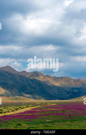 Dirt road leading through meadows of red wildflowers under a cloudy sky. - Stock Photo