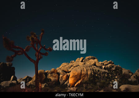 Stars over the sky at night, Joshua Trees, boulders, Joshua Tree National Park in Southern California, USA - Stock Photo