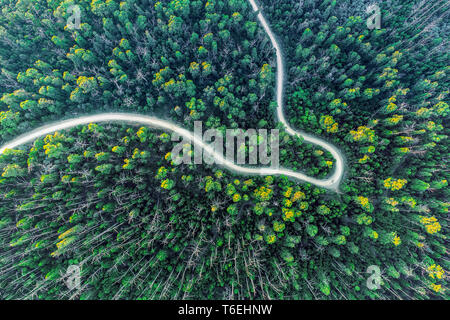 Top down view of road bending through eucalyptus forest at sunset