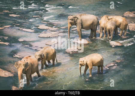 Elephants bathing in a river - Stock Photo