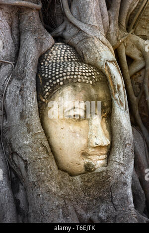 Buddha head in banyan tree, Thailand - Stock Photo