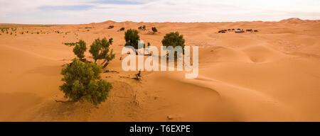 Aerial panorama of trees in Sahara desert - Stock Photo