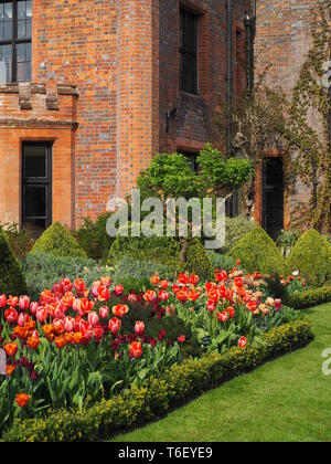 Portrait view of Chenies Manor House and Gardens in April showing colourful tulip borders in sunshine. - Stock Photo