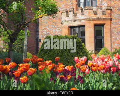Chenies Manor House and Gardens in April showing colourful tulip borders framing the house and bay window.. - Stock Photo