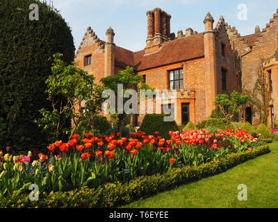 Chenies Manor House and Gardens in April showing colourful tulip borders in full bloom, lawn and topiary. - Stock Photo