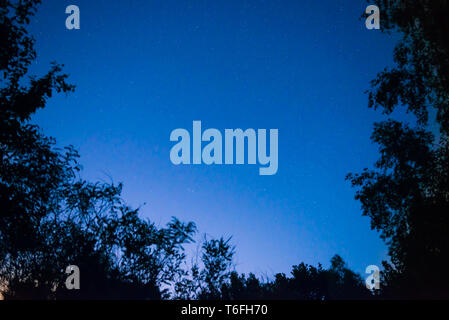 Night dark blue sky in forest - Stock Photo