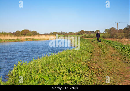 A view of the restored footpath by the old North Walsham and Dilham Canal by Ebridge Mill Pool, near North Walsham, Norfolk, England, UK, Europe. - Stock Photo