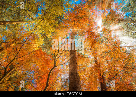 multi color trees in the autumn forest - Stock Photo