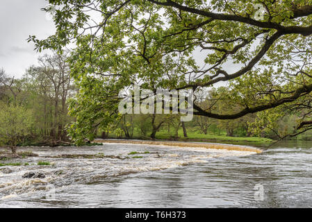The Horseshoe falls on the river Dee at Llangollen where the Llangollen canal gets its water supply. - Stock Photo