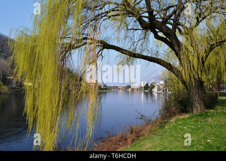 Landscape of the river Adda descent green meadow riverbank with big willow tree green branches, blue water river flow, sunny sky and view to Lecco. - Stock Photo