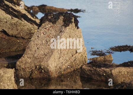Carboniferous Sandstone Exposed along the Fife Coast. Scotland, UK. - Stock Photo