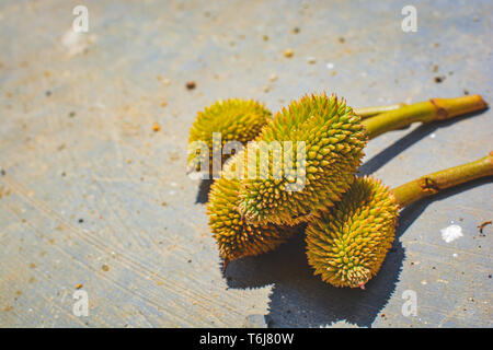 Fresh Mini Durian on ground.King of fruits.Tropical friuts summerThailand - Stock Photo