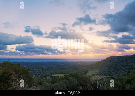 Sunset on the plantations of centuries-old olive trees in Puglia - Stock Photo