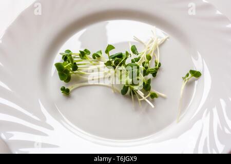 A pile of fresh radish sprouts or Kaiware Daikon on white dish. Vegan concept - Stock Photo