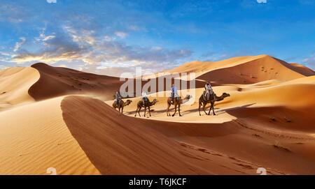 Camels rides amongst the Sahara sand dunes of erg Chebbi, Morocco, Africa - Stock Photo