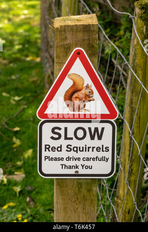 Red triangle sign warning motorists of the presence Red Squirrels - Stock Photo