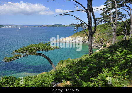 View across Carrick Roads on a beautiful summers day to Falmouth from the coastal path near St Anthony Head, Cornwall,England,UK - Stock Photo
