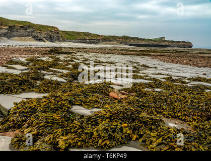 Rock formations revealed at low tide - Stock Photo