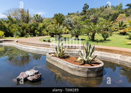 Pond with palm trees in botanical garden Madeira - Stock Photo