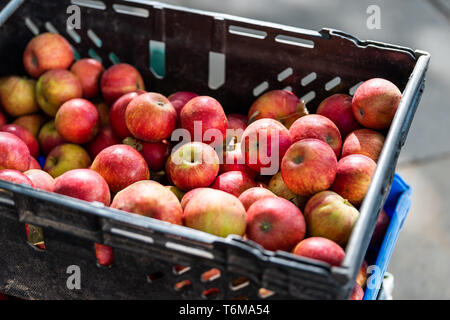 Apple store with many fruit in plastic crate box during autumn fall season in farmer's market with pink and red color - Stock Photo