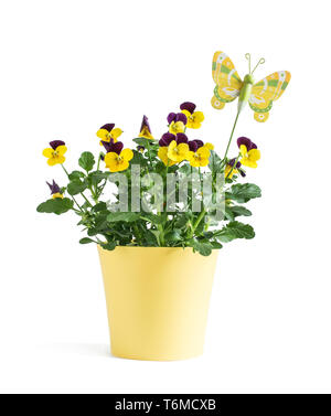 Heartsease flower in yellow vase with butterfly isolated on white background - Stock Photo