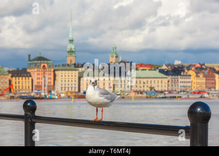 Seagull in Stockholm, Sweden - Stock Photo