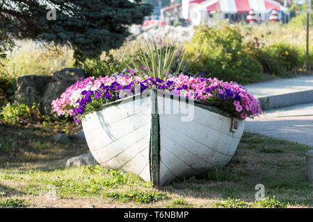 A green and white wooden boat is used to house a garden of flowers on the side of the road in Lincolnville Beach Maine. - Stock Photo