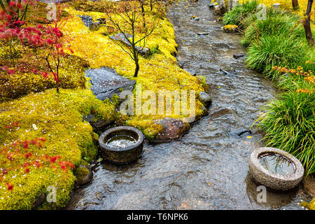 Eikando temple stone garden in Kyoto, Japan during early spring with yellow moss and green red foliage plants with small river and fallen cherry bloss - Stock Photo