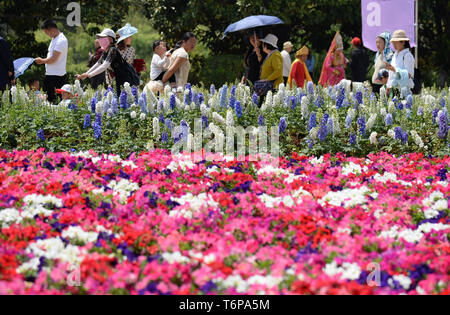Kunming. 1st May, 2019. Visitors walk past flowers at the World Horticultural Expo Garden in Kunming, southwest China's Yunnan Province, May 1, 2019, during the Labor Day national holiday. Credit: Pu Chao/Xinhua/Alamy Live News - Stock Photo