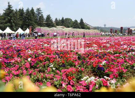Kunming. 1st May, 2019. Visitors are seen amid flowers at the World Horticultural Expo Garden in Kunming, southwest China's Yunnan Province, May 1, 2019, during the Labor Day national holiday. Credit: Pu Chao/Xinhua/Alamy Live News - Stock Photo