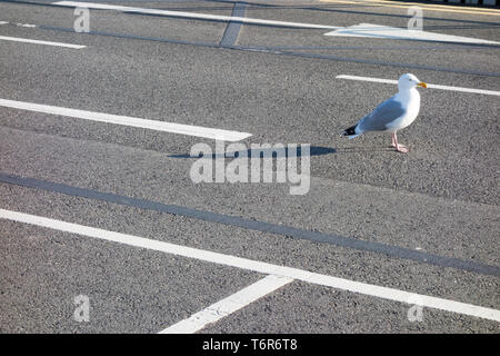 Seagull standing on the road - Stock Photo
