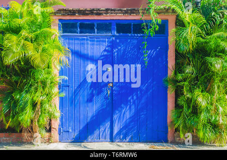 colonial wooden doors painted blue surrounded by vegetation, in the colonial zone of Santo Domingo - Stock Photo