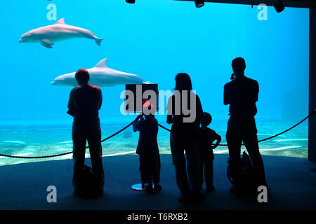 Silhouette of a standing family, three adults and two children, in front of the dolphin pool at the aquarium. - Stock Photo