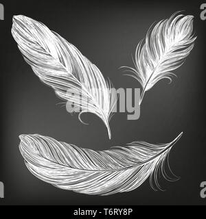 feathers white set collection hand drawn vector illustration sketch, drawn in chalk on a black Board - Stock Photo