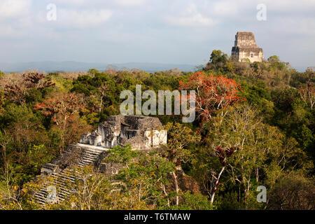 Tikal Guatemala, view of Temple VI from the top of the Mundo Perdido pyramid, Tikal National Park, Tikal, Guatemala Central America - Stock Photo