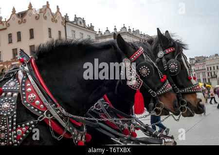Pair of black horses in harness, vintage style. Old horse-drawn carriage riding on city street in Krakow, Poland - Stock Photo
