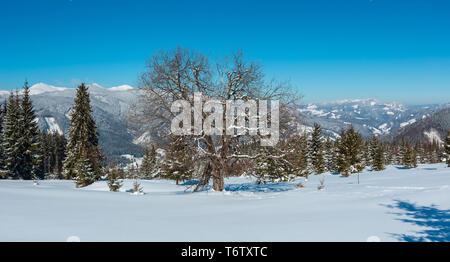 Winter snowy Carpathian mountains view, Ukraine - Stock Photo