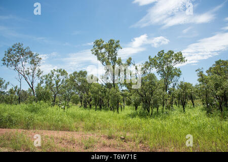 Stunning green, lush bushland growing at Litchfield National Park on a sunny day in the Northern Territory of Australia - Stock Photo